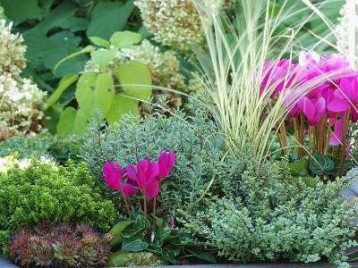 Bildnachweis: GMH/Gartenbau Hetjens