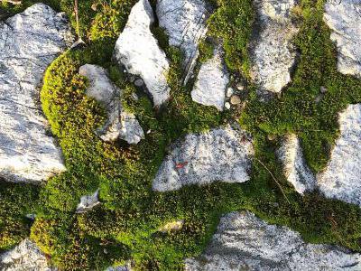 Moos in Trockenmauer Ritzn