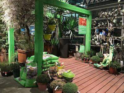 Terrassen richtig bepflanzen