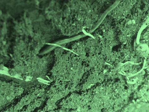 Wurm und keimende Pflanze im Erdreich