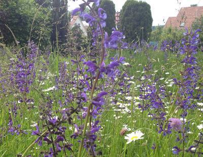 Bild garten.ch: Blumenwiese