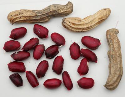 Bild Lubera GmbH: (Not) Just Peanuts® Justmore®