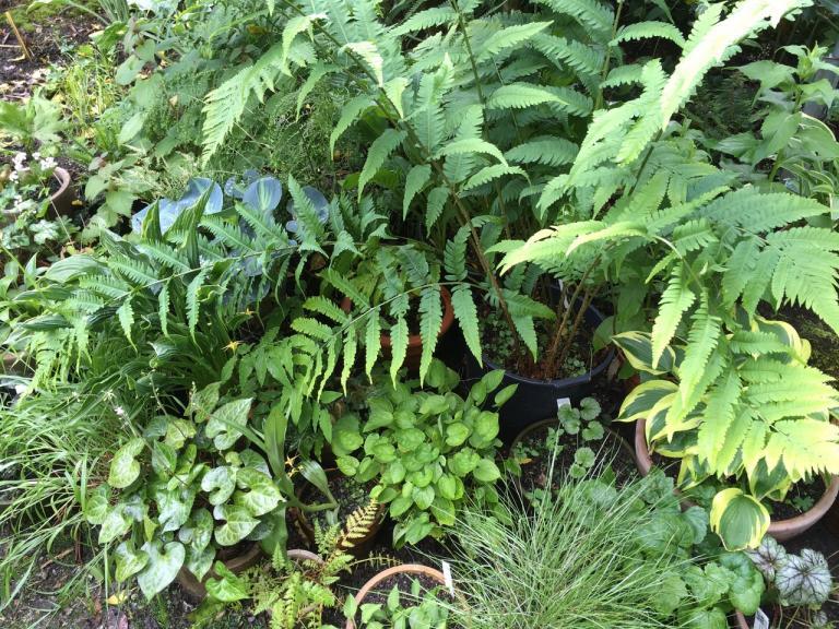 Artenvielfalt mit mehrjährigen Topfbepflanzungen