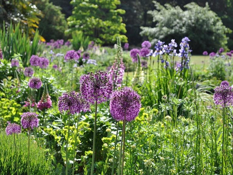 Bild: Cambridge University Botanic Garden - Bee borders