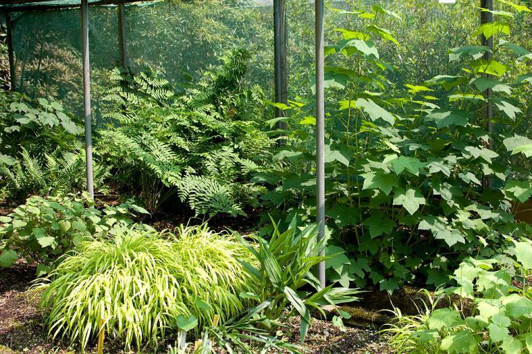 Gärtnerei Blattgrün