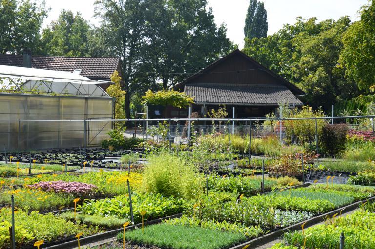 Baumschule / Pflanzencenter Todt AG