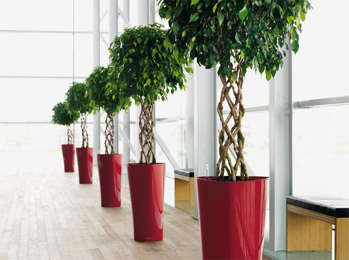 Pflanzen Bacher Garten-Center AG