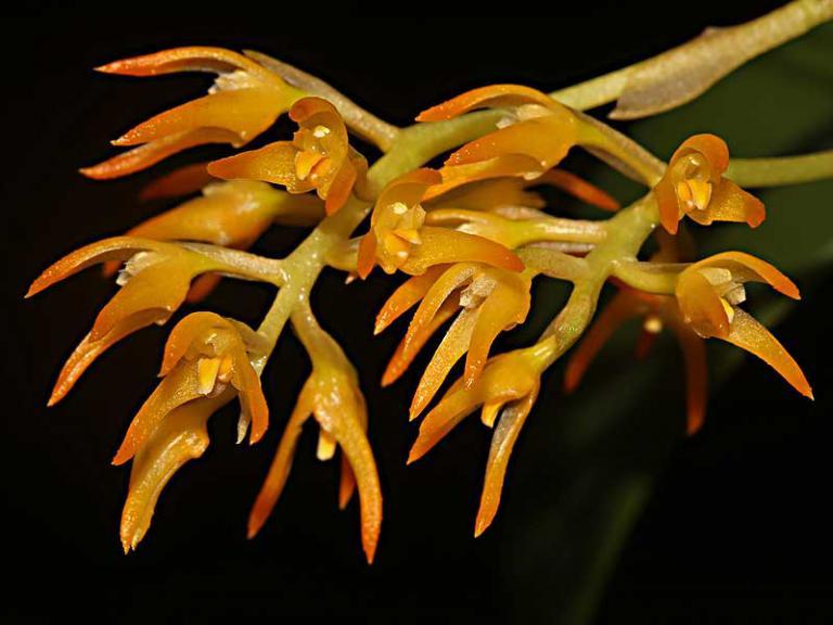 Orchideen Amsler