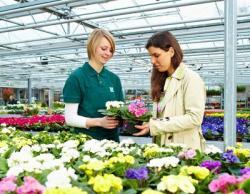 Bild GMH: Primeln und andere tolle Frühlingsblüher gibt es jetzt im gärtnerischen Fachhandel in modischen Trendfarben. Ob knallig oder bunt: Hier findet jeder seine Lieblingsblumen für die Saison!