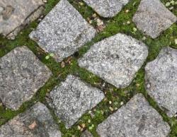 Bild garten.ch: Moos auf Wegen und Plätzen