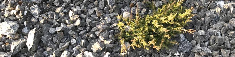 Bild garten.ch: Schotterwüste